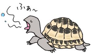 亀のあくび