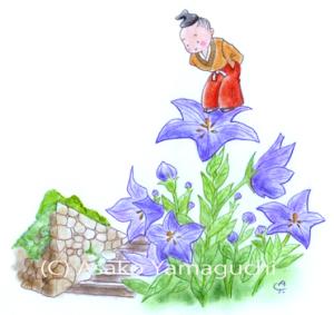 光秀さんと桔梗の花