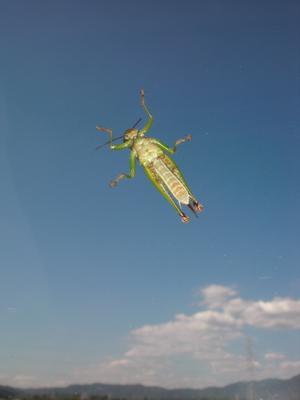 空を泳ぐ虫
